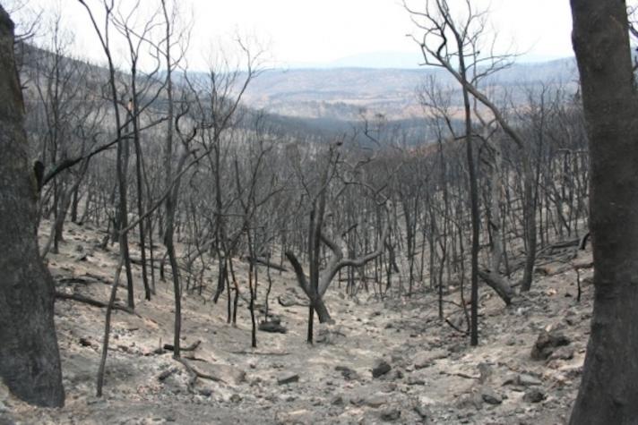 Image credit: Bushfire CRC
